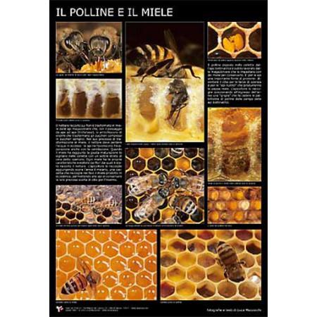 "Poster ""Pollen and honey"", 60x90 cm"